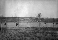 Men and women playing tennis, State Normal School campus