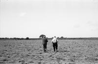 James A. Michener and an unidentified man walking in a field, ca. 1960s