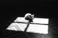 A kitten lays on the floor, ca. 1960s.