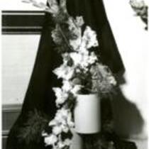 """Gladiolus """"Pink Smoke"""""""