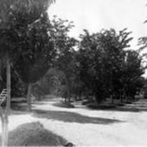 Tree-lined paths, State Normal School campus
