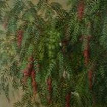 California Pepper Tree by Elizabeth Farr