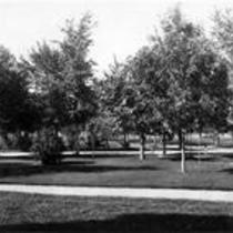 Tree-filled landscape, State Normal School campus
