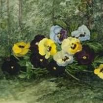 Pansies by Elaine Robbins