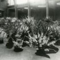 Gladiolus arrangements