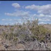 Vegetation, New Mexico